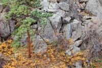 Boulder, Colorado, Open Space, OSMP, Gregory Canyon, Fall