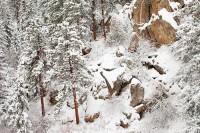 Boulder, Coloroado, Winter, Gregory Canyon, Ponderosa Pine, Granite, Snow