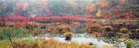 New York, Harriman State Park, Fall Color, Hudson Valley
