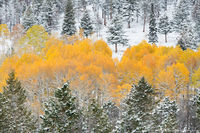 Horesehoe Park, Rocky Mountain National Park,Colorado,RMNP,Aspens,Fall,Autumn,October,Pines,Snow,Winter,Seasons,Landscape,Photography,Trail Ridge Road,Storm,Estes Park