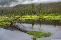 Beaver Ponds,West Side,Grand Lake,Trail Ridge Road,RMNP,Colorado,Rocky Mountain National Park,July,Fog,Landscape,Photography,Kawuneeche Valley