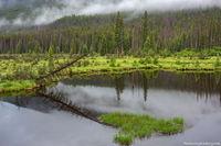 Beaver Ponds,West Side,Grand Lake,Trail Ridge Road,RMNP,Colorado,Rocky Mountain National Park,July,Fog,Landscape,Photography,Kawuneeche Valley