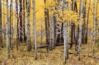 Kebler Pass, Crested Butte, Colorado, Fall, Aspens, Autumn
