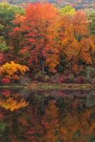 Harriman State Park, Sugar Maples, New York, Fall Color, Hudson Valley