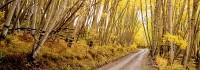 Last Dollar Road, Telluride, Ridgway, San Juans, Colorado, Aspen, Fall