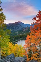 Bear Lake,Rocky Mountain National Park,Longs Peak,Fall Aspens,Colorado,gold