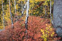 Lumpy Ridge,Autumn,Fall,Aspens,Color,RMNP,Rocky,Rocky Mountain National Park,Colorado,Landscape,Photography,Estes Park,McGregor Ave,October