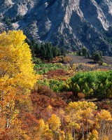 Crested Butte, Colorado, Fall color, Aspens, Kebler Pass