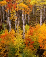 McClure Pass, Aspen, Crested Butte, Marble, Crystal, Redstone, White River National Forrest, Fall Co