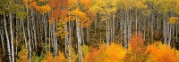 McClure Pass, Fall Color, Aspen, Crested Butte, Redstone, Marble