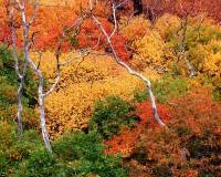 Mesa Verde National Park, Colorado, Scrub Oak, Fall Color, Wildfires