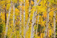 Mill Creek,Hollowell Park,Fall,September,Aspens,Autumn,Trees,Estes Park,Bear Lake Road,RMNP,Colorado,Rocky Mountain National Park,Landscape,Photography