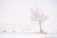 Moraine Park,November,RMNP,Bear Lake Road,Estes Park,Colorado,Rocky Mountain National Park,Tree,Aspen,Landscape,Photography,Winter,Snow