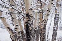 Moraine Park,Aspens,Winter,February,Landscape,Photography,Estes Park,Bear Lake Road,Snow,Storm,Boles,RMNP,Rocky Mountain National Park,Colorado,Trees,Big Thompson,River