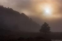 RMNP,Estes Park,Bear Lake Road,Moraine Park,Colorado,Rocky Mountain National Park,Fog,Morning,Mystical,Landscape,Photography,October,Elk,rut