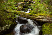 Onahu Creek,Grand Lake,West Side,RMNP,Rocky Mountain National Park,Stream,Green,July,Landscape,Photography,Colorado River,Kawuneeche Valley