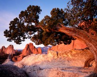 Colorado, Garden of the Gods, Gateway Rock, Juniper, Pikes Peak