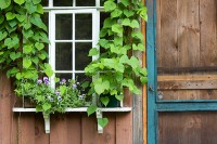 Elmira, New York, Finger Lakes, Potting Shed, Window and Door