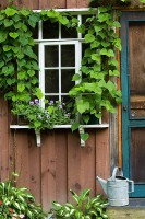 Finger Lakes, Elmira, New York, Potting Shed, Windows