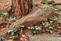 Boulder, Colorado, Open Space and Mountain Parks, Flagstaff Mountain, Snow, Holly, OSMP