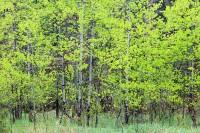 Boulder, Colorado, Spring, Open Space, OSMP, Apsen, Tree's, Gregory Canyon