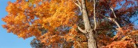 Harriman State Park, New York, Fall, Sugar Maples