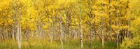 Maroon Bells, Aspen, Fall Color, Maroon Creek