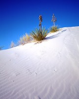 White Sands, National Monument, New Mexico, Sand Dunes, Gypsum, Yucca
