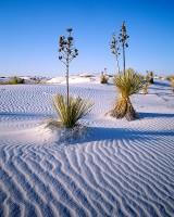 White Sands, Yucca, Alamogordo, Yucca, New Mexico