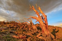 Rocky Mountain National Park, Colorado, Trail Ridge, Winds, Trees,krummholz,clouds
