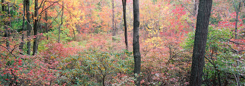 Fall on Bear Mountain - Panoramic View