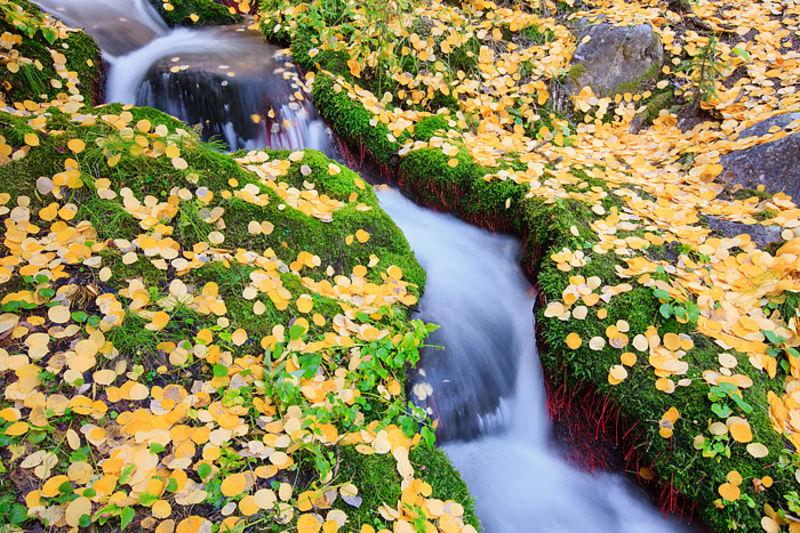 Bubbling Boulder Brook