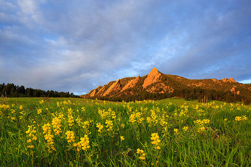 Boulder,Colorado,wildflowers,golden banner,Chautauqua park,meadow, Flatirons,spring,Open Space