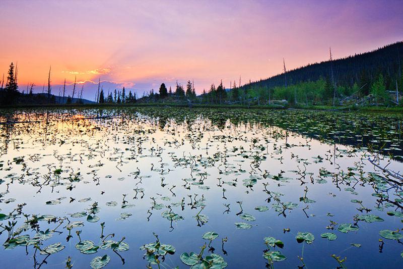 Chickadee Pond
