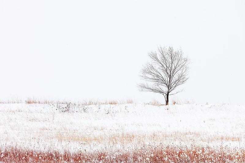 Winter On Davidson Mesa