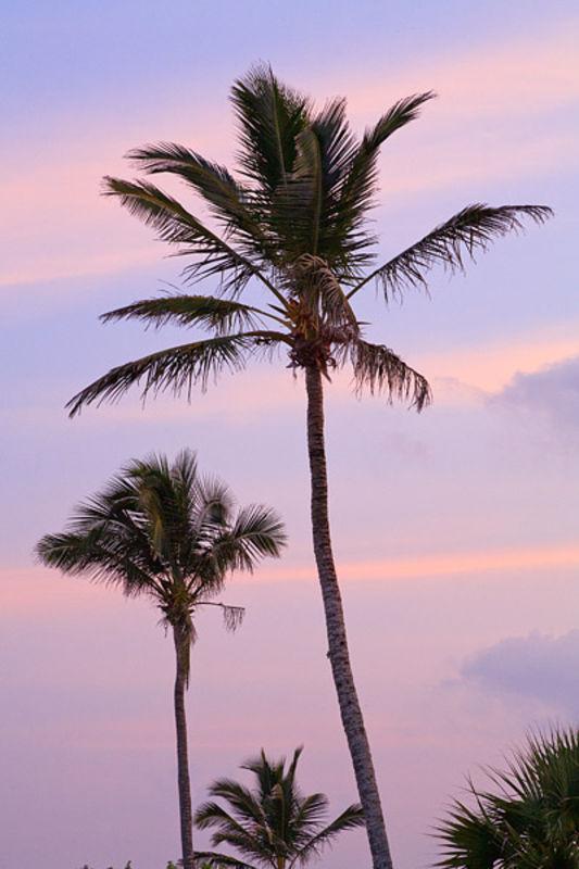Elbow Beach Pastel Sunset