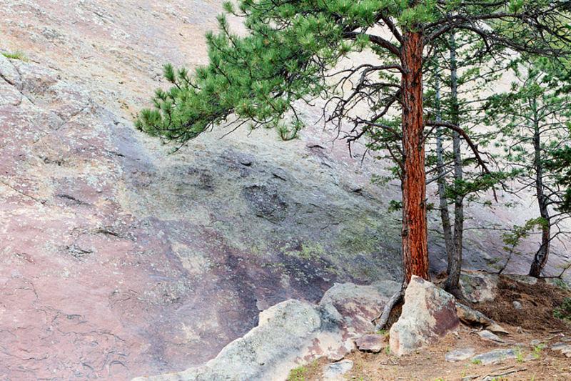 Fern Canyon Granite And Lone Ponderosa