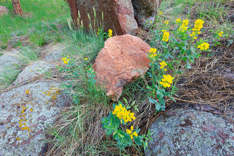 Golden Banner And Rocks