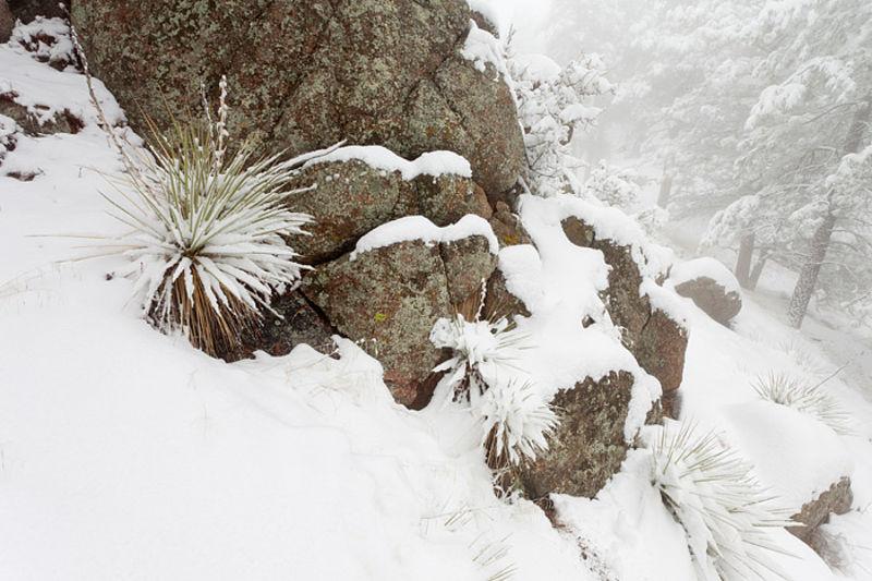 Frozen Yucca Mound
