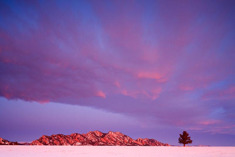 Tree And Flatirons At Daybreak