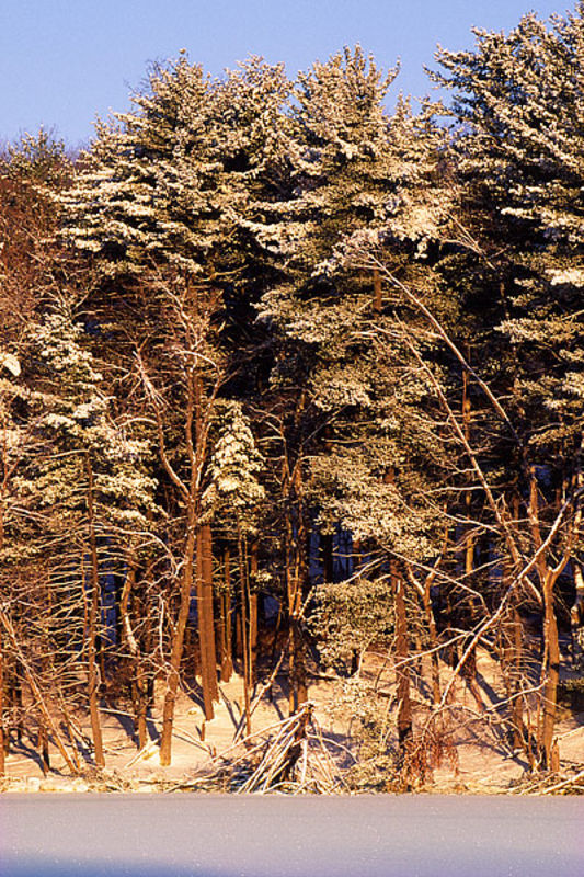 Frosted Pines - Harriman State Park