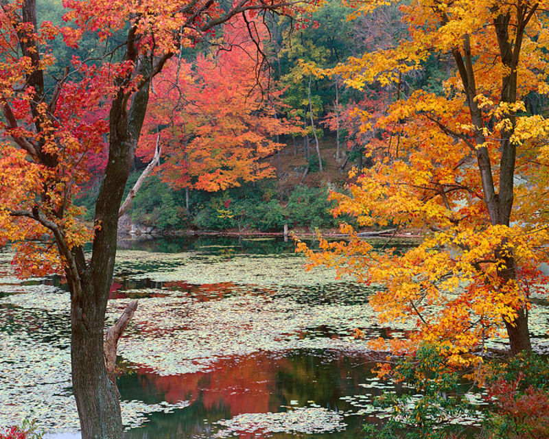 Fall Color and Pond
