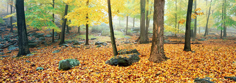 Fall in Harriman State Park