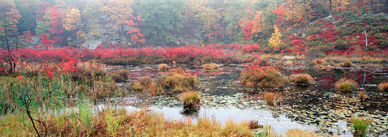 Colors of Fall - Harriman State Park