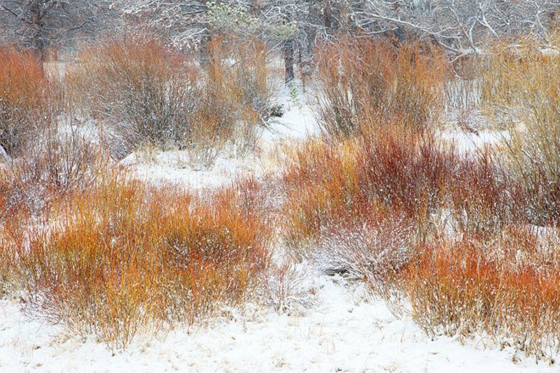 Mill Creek Winter Willows