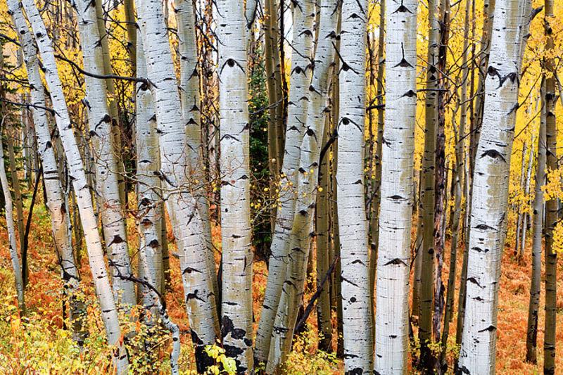 Shades of Fall on Kebler Pass