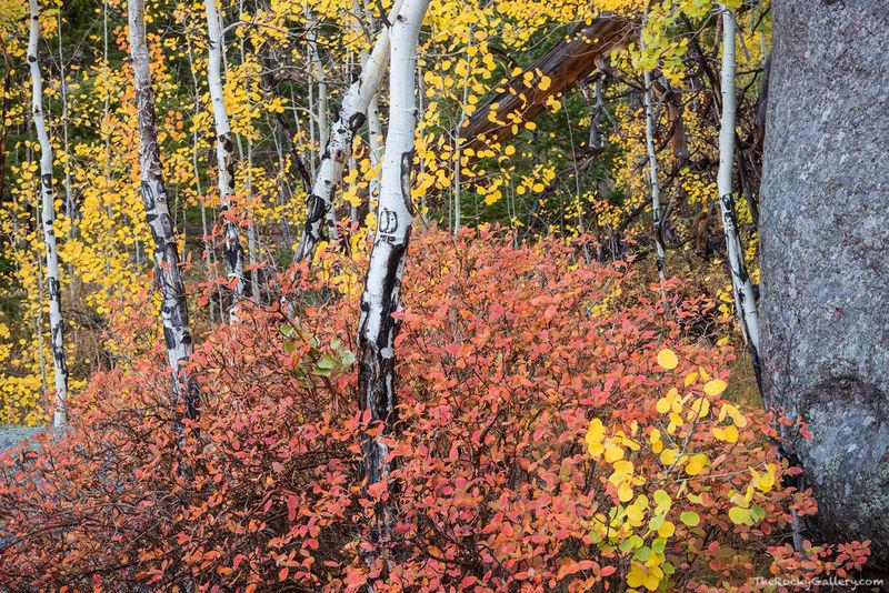 Lumpy Ridge Autumn Serenade