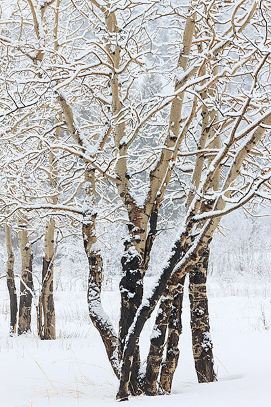 Snow For Moraine