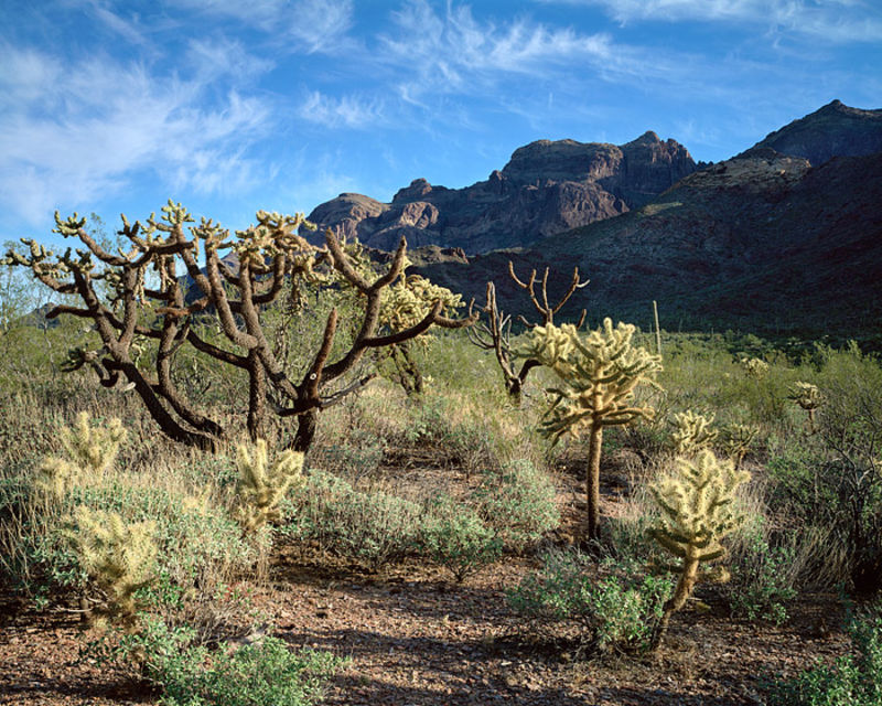 Cholla and Ajo Mountains