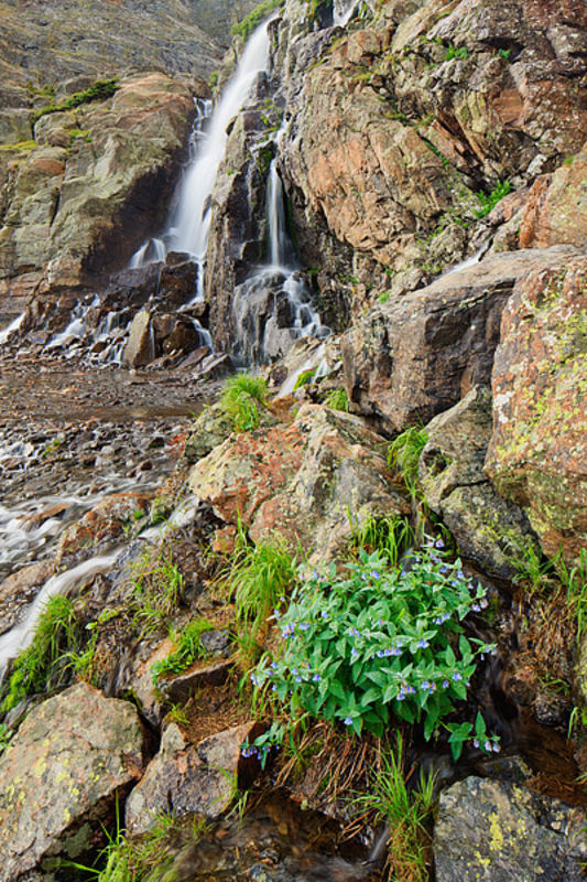 Timberline Falls And Mountain Bluebells